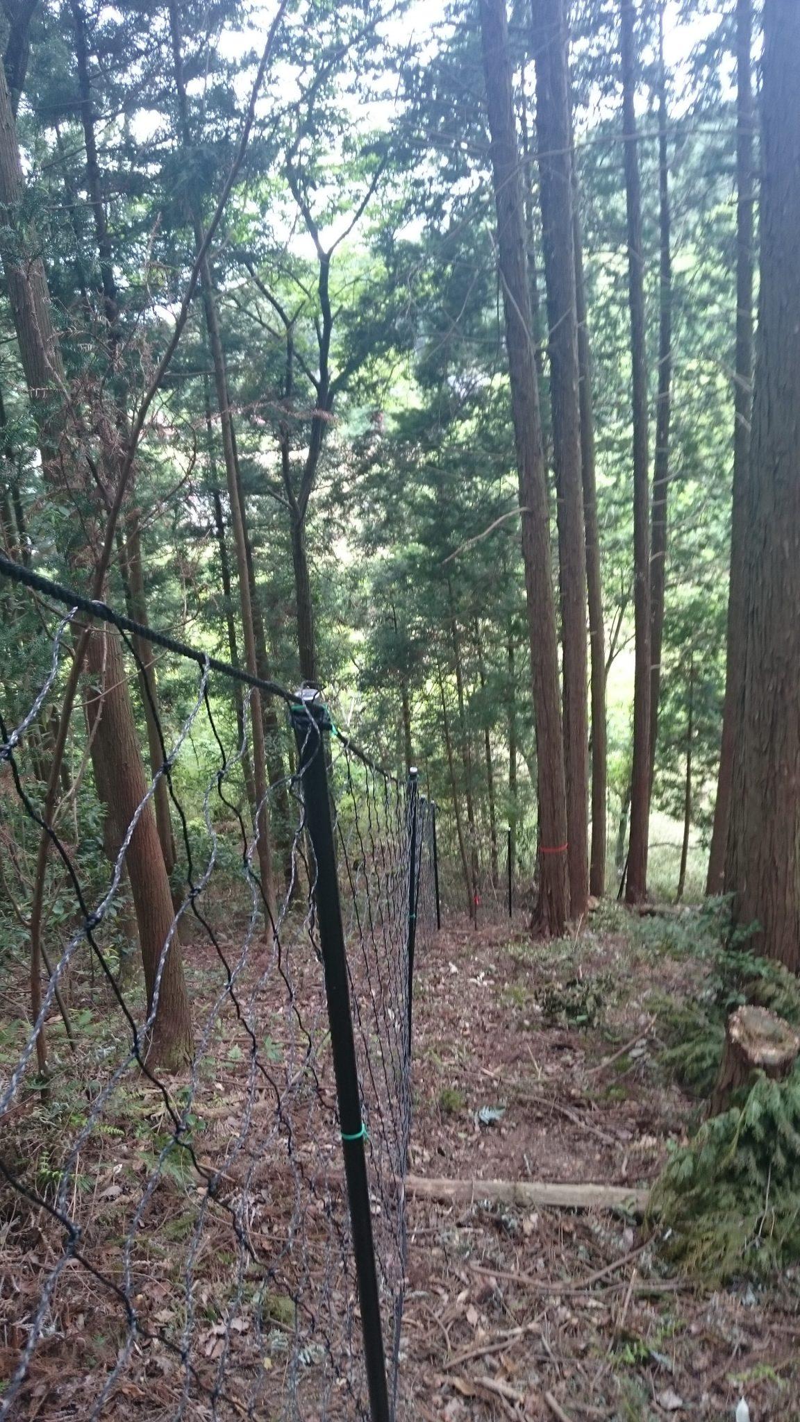 5月中旬 鹿防護柵設置
